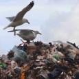 di CiminnAttiva Il consiglio comunale ha approvato il protocollo d'intesa che dà inizio al procedimento di costituzione dell'area rifiuti ottimali(A.R.O). Insomma s'inizia a costituire un altro carrozzone per la gestione dei rifiuti, stavolta in scala ridotta rispetto a quello appena liquidato, cioè il famigerato COINRES. Ironia della sorte (ma non tanto) a Ciminna gli stessi amministratori che hanno negli anni scorsi fatto nascere, crescere e morire il COINRES sono di nuovo in carica. Ci si può fidare degli autori della porcata COINRES? Certamente no! Gli attori oggi in campo sono […]