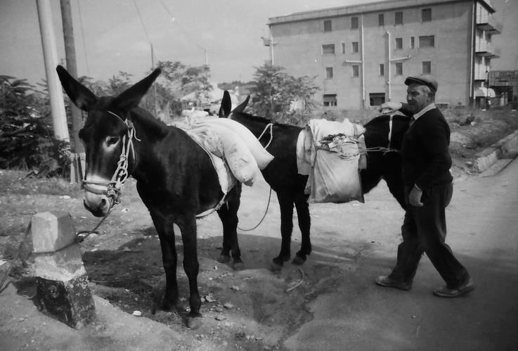 L asino e la sicilia svelata for 1 case di storia