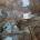 di LiberaMente Ciminna La tradizione del Presepe a Cimmina esiste da molti anni, ma il presepe parrocchiale è stato da sempre unpunto di riferimento per tutti i fedeli, il Presepe per eccellenza. Negli anni, in molti si sono succeduti nell'allestire secondo le proprie abilità il Presepe parrocchiale, ma mai nessuno era riuscito ad allestirlo per ben 12 anni consecutivi. Dodici anni di passione, impegno, fantasia e fede che hanno consentito a Francesco BUCARO e Francesco CALECA di portare avanti una tradizione che adorna e valorizza nel periodo natalizio la nostra […]